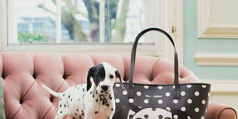 Dog breed, Carnivore, Dog, Pattern, Dalmatian, Bag, Companion dog, Dog supply, Sporting Group, Shoulder bag,
