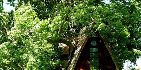 Leaf, Woody plant, Rural area, Hut, Home fencing, Fence, Shrub, Jungle, Village, Shack,