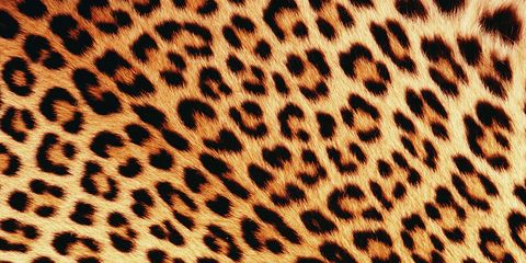 1a76d718dc We love a bit of leopard print – whether it s a chic leopard shoe or a bold  printed coat