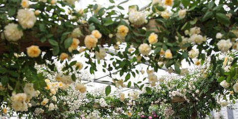 White, Photograph, Flower, Spring, Plant, Floristry, Garden, Botany, Floral design, Architecture,
