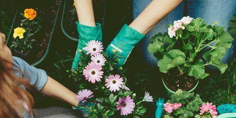 Green, Flower, Plant, Bouquet, Hand, Spring, Floral design, Floristry, Leaf, Summer,