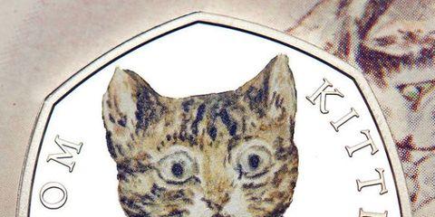 Serveware, Vertebrate, Dishware, Felidae, Small to medium-sized cats, Whiskers, Cat, Carnivore, Porcelain, Iris,