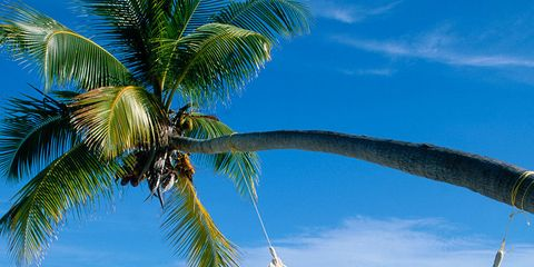 Hammock, Tropics, Vacation, Sky, Tree, Caribbean, Palm tree, Azure, Beach, Arecales,