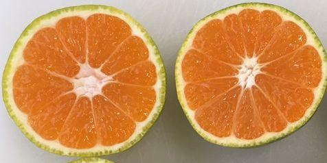 Citrus, Rangpur, Fruit, Food, Orange, Mandarin orange, Citric acid, Clementine, Bitter orange, Tangerine,