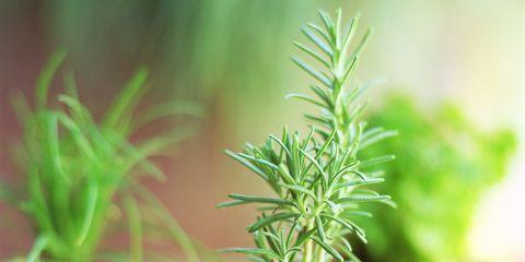 Flowerpot, Plant, Houseplant, Leaf, Rosemary, Flower, Tree, Herb, Terrestrial plant, Plant stem,