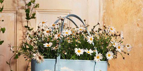Flowerpot, Flower, Floral design, Plant, Houseplant, Still life, Wildflower, Floristry, Flower Arranging, Cut flowers,