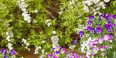Garden Pest Control - cover