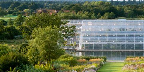 Grass, Plant, Shrub, Garden, Plant community, Landscape, Natural landscape, Botany, Groundcover, Grass family,