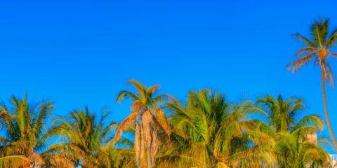 Tree, Arecales, Majorelle blue, Woody plant, Azure, Sand, Shade, Beach, Tropics, Aqua,