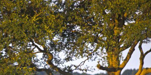 Branch, Deer, Natural environment, Natural landscape, Vertebrate, Twig, Tree, Nature reserve, Terrestrial animal, Adaptation,