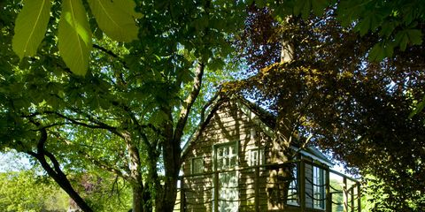 Shade, House, Park, Tree house, Yard, Cottage, Outdoor structure, Woodland, Landscaping, Plantation,