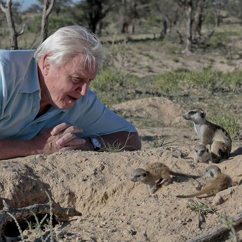 Soil, Adaptation, Terrestrial animal, Snout, Wildlife, Wrinkle, Meerkat, Grandparent, Mongoose, Wildlife biologist,