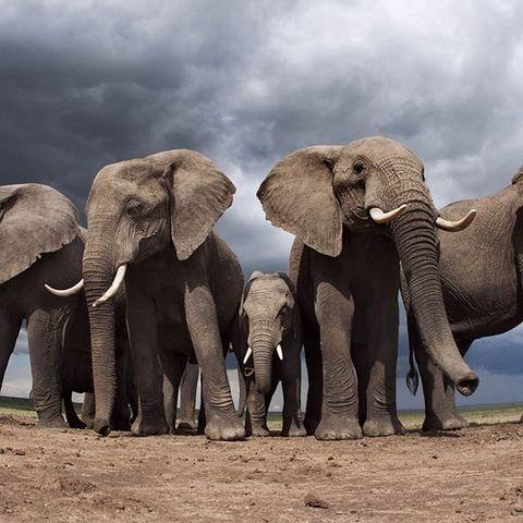 Elephant, Elephants and Mammoths, Daytime, Organism, Skin, Vertebrate, Photograph, Landscape, Plant community, Terrestrial animal,