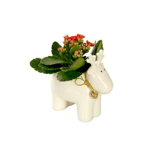 Petal, Flower, Cut flowers, Toy, Beige, Artificial flower, Flowering plant, Animal figure, Working animal, Figurine,