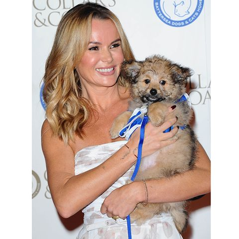 Dog breed, Vertebrate, Carnivore, Dog, Iris, Toy dog, Puppy, Companion dog, Maltepoo, Brown hair,