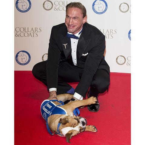 Vertebrate, Dog breed, Carnivore, Logo, Dog, Dog supply, Companion dog, Canidae, Sporting Group, Wall clock,