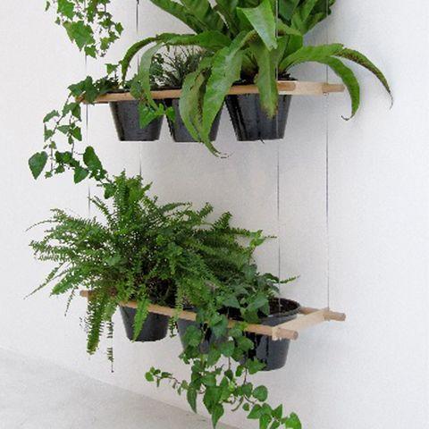 Branch, Leaf, Flowerpot, Botany, Plant stem, Terrestrial plant, Herb, Twig, Houseplant, Interior design,