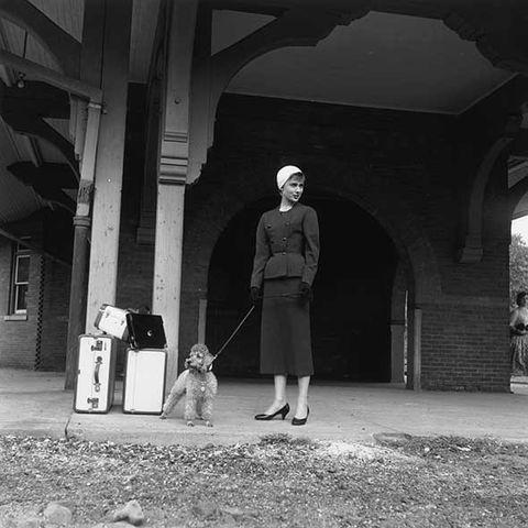 Standing, Carnivore, Monochrome, Dog, Monochrome photography, Dog breed, Darkness, Black-and-white, Sidewalk, Shadow,