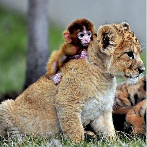 Nature, Organism, Natural environment, Skin, Vertebrate, Terrestrial animal, Primate, Nature reserve, Adaptation, Big cats,