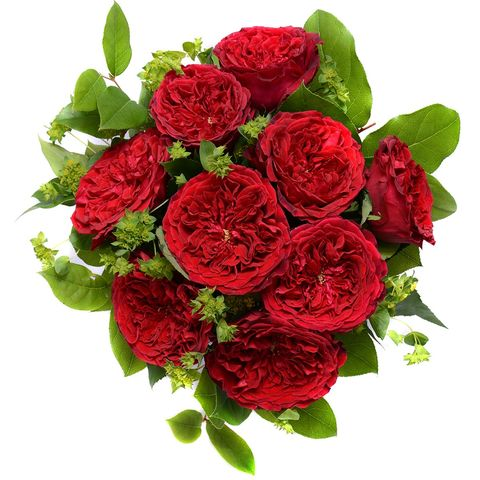 Petal, Flower, Leaf, Red, Flowering plant, Botany, Rose family, Cut flowers, Rose order, Floristry,