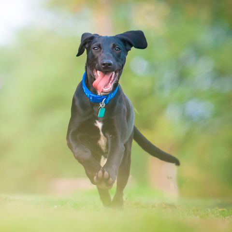 Dog breed, Dog, Collar, Carnivore, Sporting Group, Dog collar, Dog supply, Snout, Companion dog, Working animal,