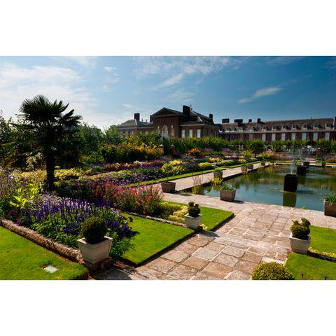 Plant, Garden, Shrub, Lavender, Landscaping, Park, Lawn, Botanical garden, Yard, Gardening,