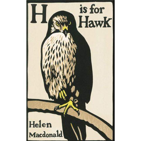 Yellow, Organism, Beak, Bird, Accipitridae, Bird of prey, Vertebrate, Accipitriformes, Adaptation, Falconiformes,