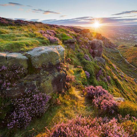 Natural landscape, Sun, Plant community, Purple, Bedrock, Sunlight, Lavender, Sunset, Sunrise, Wildflower,