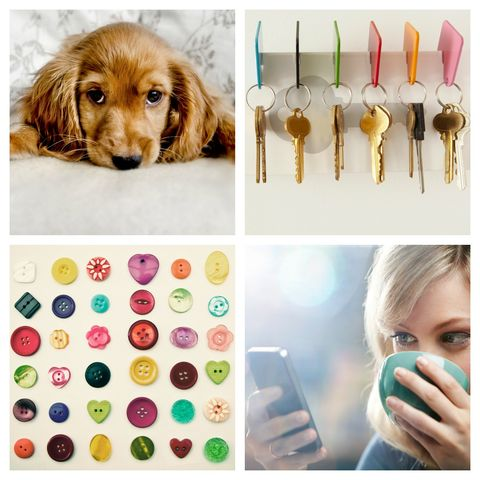 Brown, Product, Dog, Colorfulness, Carnivore, Dog breed, Iris, Eyelash, Liver, Nail,