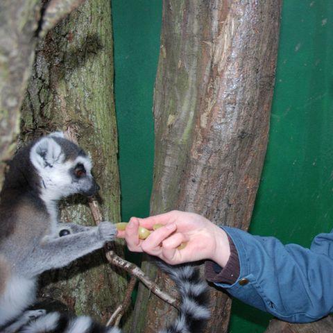 Finger, Primate, Lemur, Adaptation, Snout, Terrestrial plant, Trunk, Terrestrial animal, Fur, Wildlife biologist,
