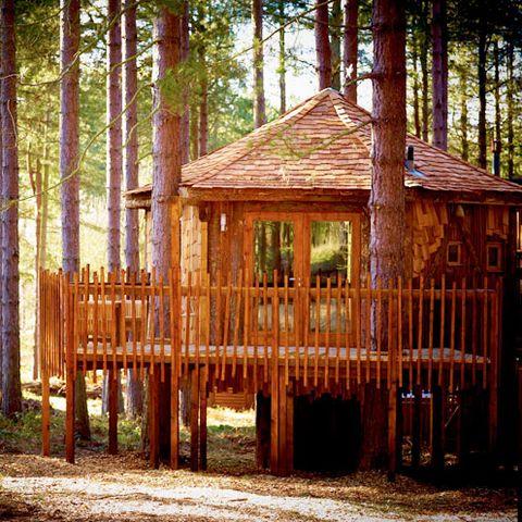 Wood, Hardwood, Biome, Roof, Gazebo, Forest, Shade, Lumber, Trunk, Pavilion,