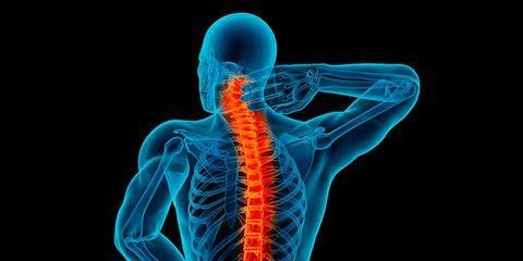 Shoulder, Organism, Human anatomy, Joint, Electric blue, Organ, Orange, Neck, Muscle, Bone,
