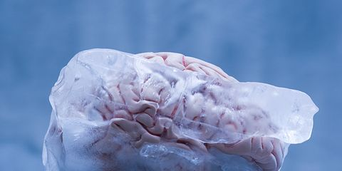 Organism, Pink, Freezing, Winter, Ice, Close-up, Snow, Macro photography, Natural material, Still life photography,