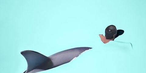 Marine mammal, Beak, Fin, Ducks, geese and swans, Bird, Waterfowl, Seaduck, Fish, Water bird, Illustration,