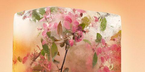 Pink, Orange, Petal, Amber, Paint, Magenta, Peach, Art, Paper product, Floral design,