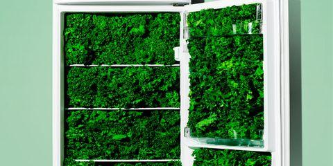 Green, Grass, Leaf, Plant, Rectangle, Tree, Window,