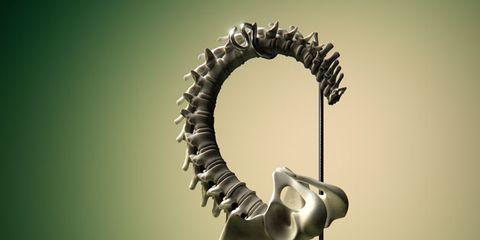 Circle, Still life photography, Spiral,