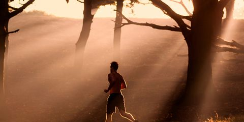 Branch, Tree, People in nature, Sunlight, Atmospheric phenomenon, Light, Deciduous, Jogging, Tints and shades, Mist,
