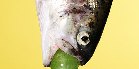 Food, Fish, Ingredient, Colorfulness, Seafood, Produce, Fish, Close-up, Fruit, Plant stem,
