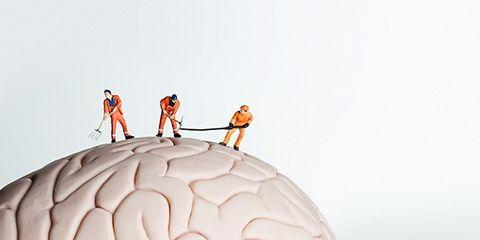 Joint, Brain, Organ, World, Brain, Human anatomy,
