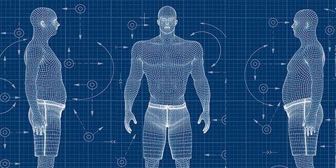 Human anatomy, Standing, Human, Organ, Joint, Human body, Back, Art,