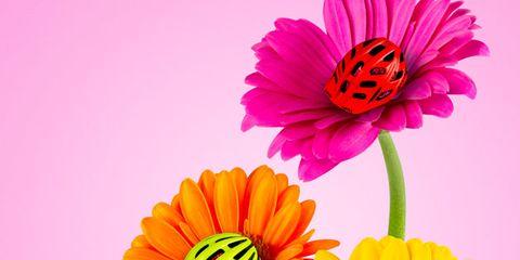 Flower, barberton daisy, Petal, Plant, Flowering plant, Gerbera, Cut flowers, Orange, Yellow, Pink,