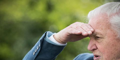 Nose, Arm, Human, Wrinkle, Hand, Photography, Gesture, Ear, Grandparent,