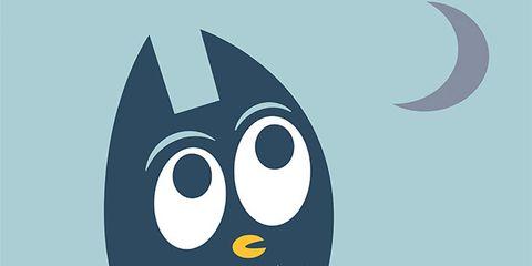 Owl, Illustration, Bird, Bird of prey,