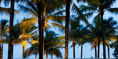 Plant, Resort, Real estate, Arecales, Woody plant, Shade, Walkway, Garden, Palm tree, Landscaping,