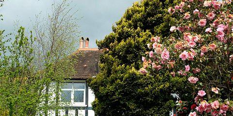 Plant, Shrub, Property, Flower, House, Garden, Real estate, Pink, Home, Building,
