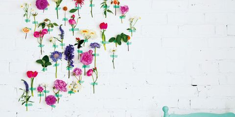 Petal, Flower, Pink, Purple, Wall, Paint, Floristry, Lavender, Magenta, Flower Arranging,