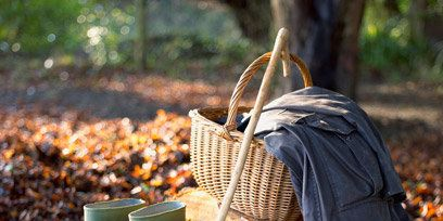 Leaf, Deciduous, Tints and shades, Sunlight, Autumn, Twig, Rain boot, Boot, Household supply, Woodland,