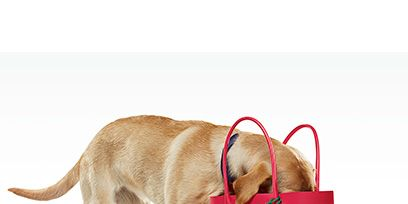 Brown, Collar, Bag, Dog, Dog breed, Carnivore, Shoulder bag, Dog collar, Pet supply, Fawn,