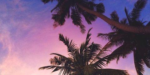Nature, Sky, Daytime, Tree, Arecales, Summer, Woody plant, Sunlight, Beauty, World,